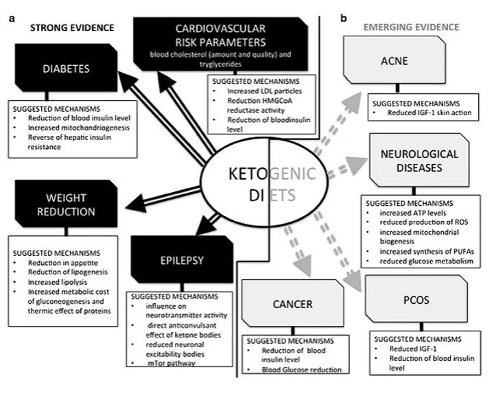 come calcolare la dieta chetogenica dei macronutrienti